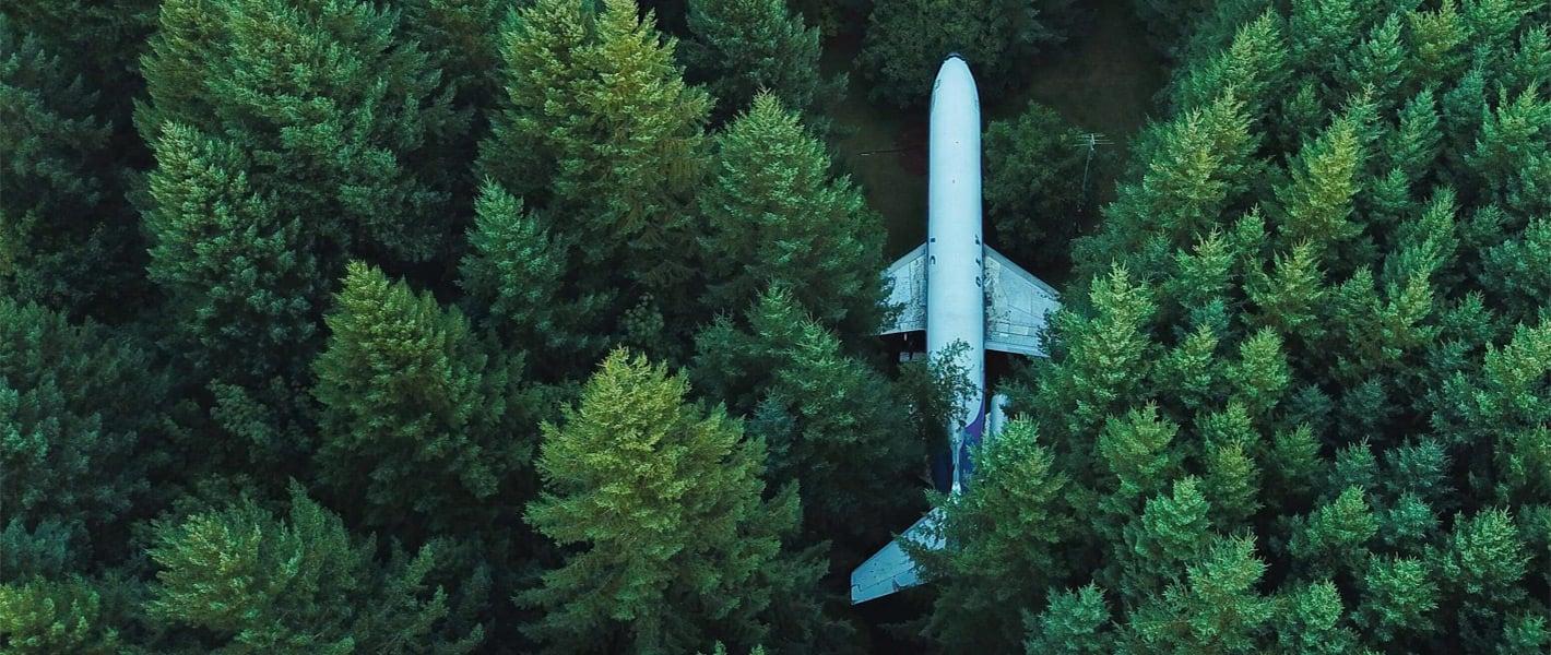 plane through trees